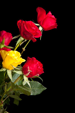 sweetheart roses for Valentine's Day
